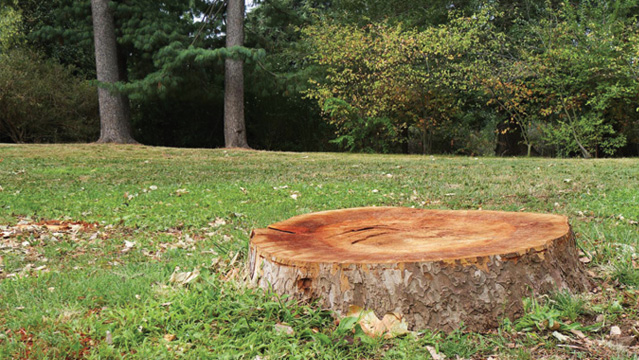 How to get rid of a tree trunk-lacase.mu