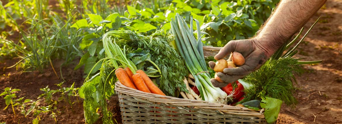 Organic Gardening: The key to a healthy diet-lacase.mu