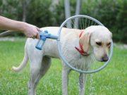 Système de lavage pour chiens