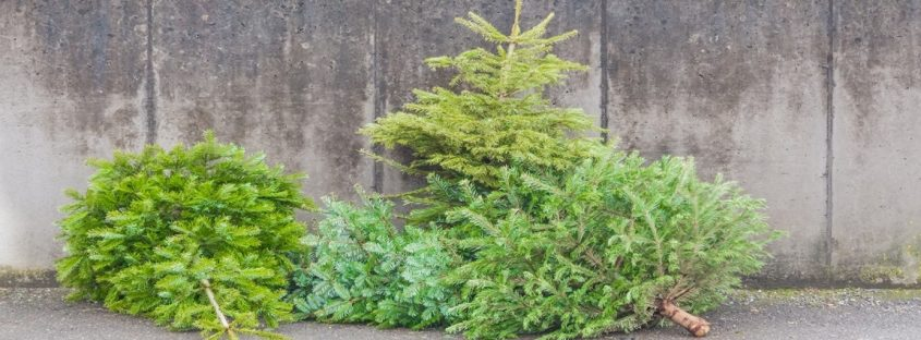 Recyclage sapin Noel LaCase.mu banner