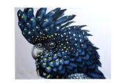 Tableau Oiseau Kakatua