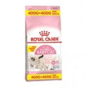 Cat food- Royal Canin