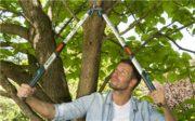 Coupe-branches télescopique