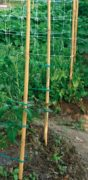 Bamboo Support Stake
