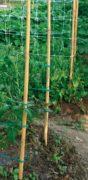Tuteur en bambou robuste