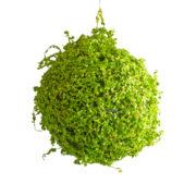 Boule d'herbe déco